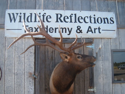 Wildlife Reflections Taxidermy By Jared Green